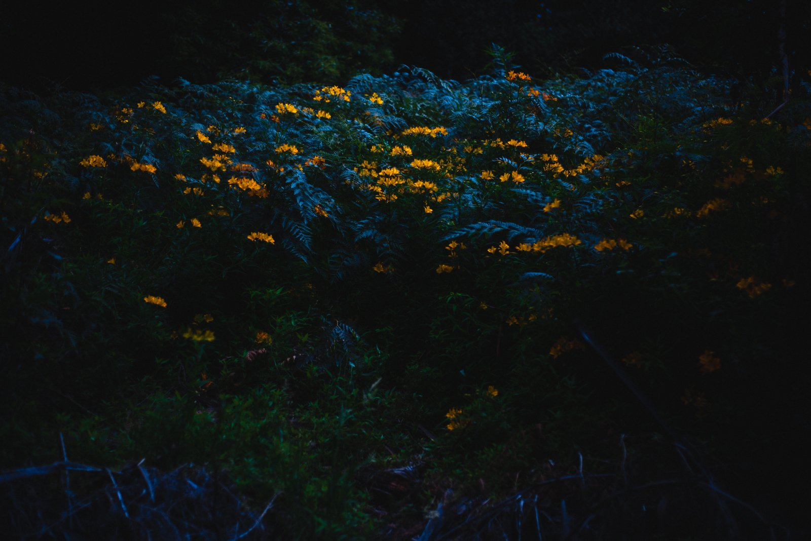 Bush with flowers at dusk